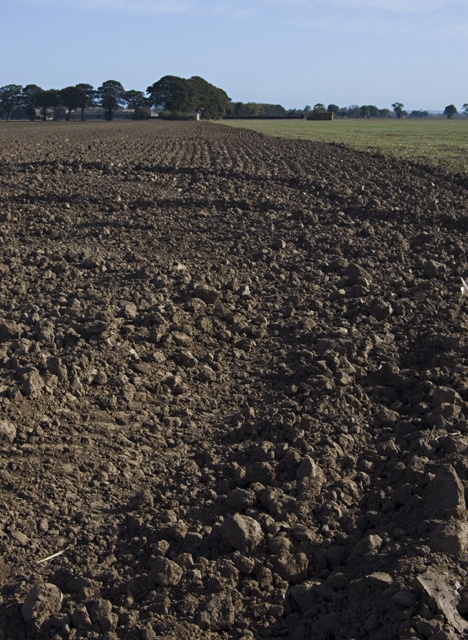 Sandhall fields, near Goole