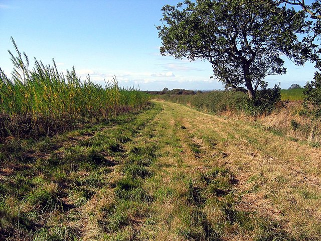 Footpath alongside field of willows