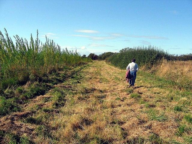 Footpath approaching Castle Eden Walkway