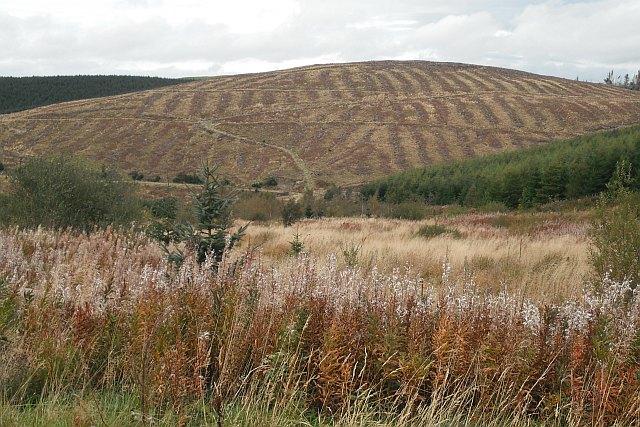 Unplanted watercourse