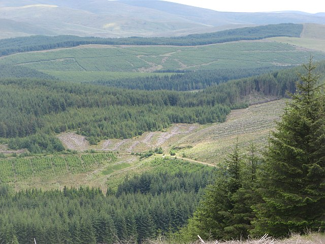 Forest beneath Clyde Law