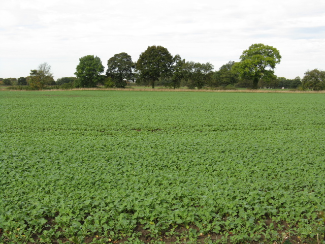 Crops At Daisybank Farm