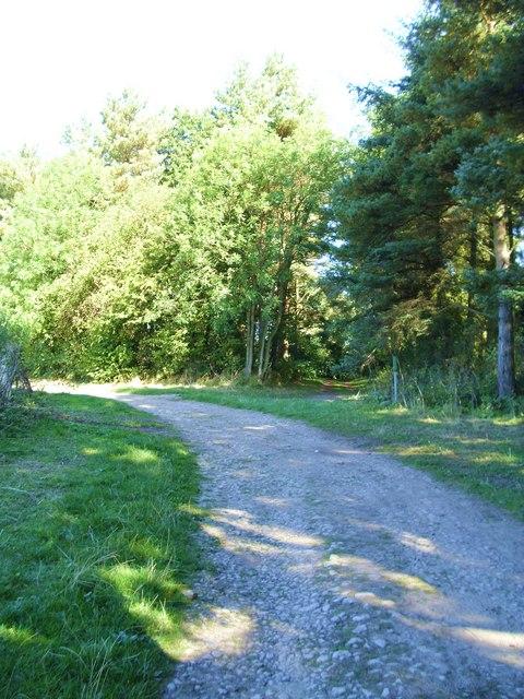 Junction of tracks, Rumsdale Plantation