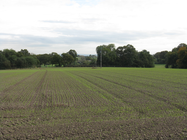 Fieldscape Near The Ashes