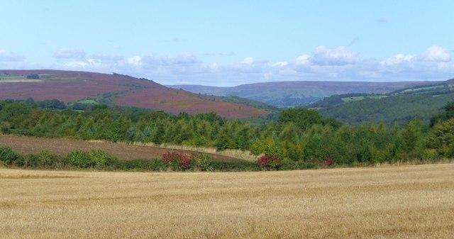 Stubble and heather near Gillamoor