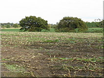 SJ6984 : Stubble Field Off Mowpen Brow by Peter Whatley