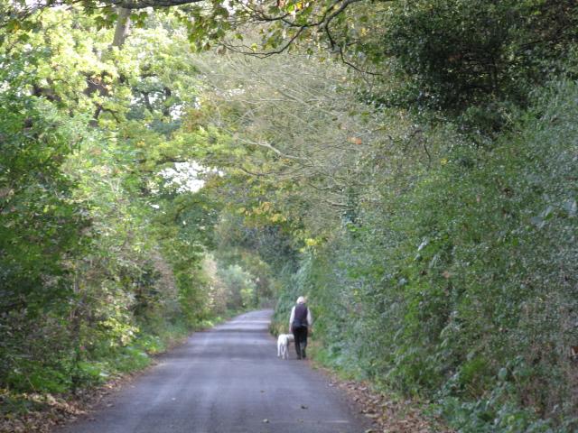 Walking The Dog, Wrenshot Lane, High Legh