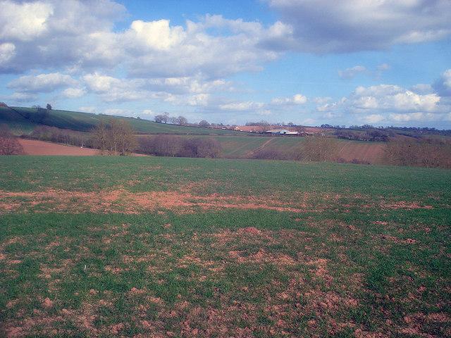 Arable land near Oak Wood