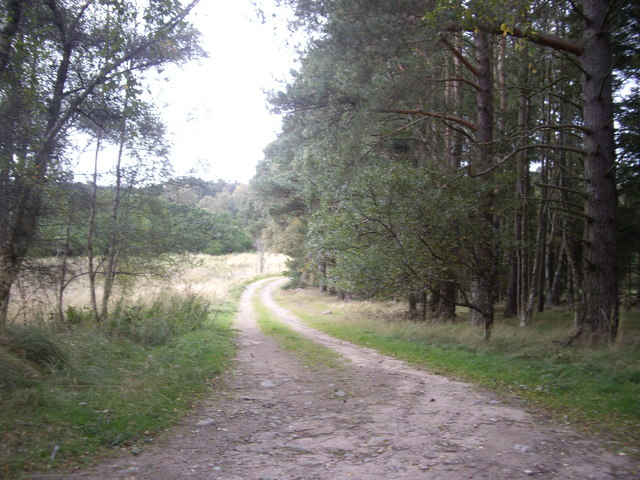 Track by woodland edge in Autumn