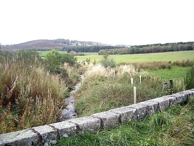 Upstream Green Burn