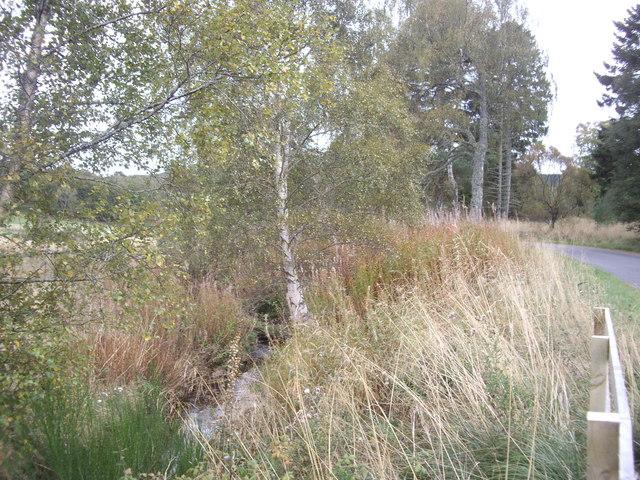 Downstream Green Burn