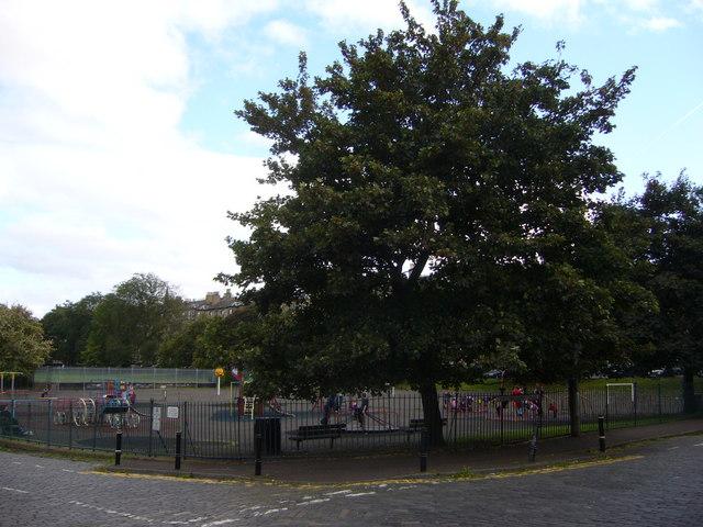Tree, Montgomery Street Playpark