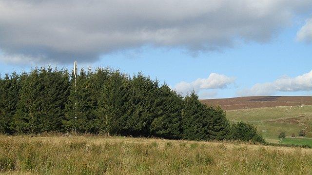 Wood, Tomnagrew