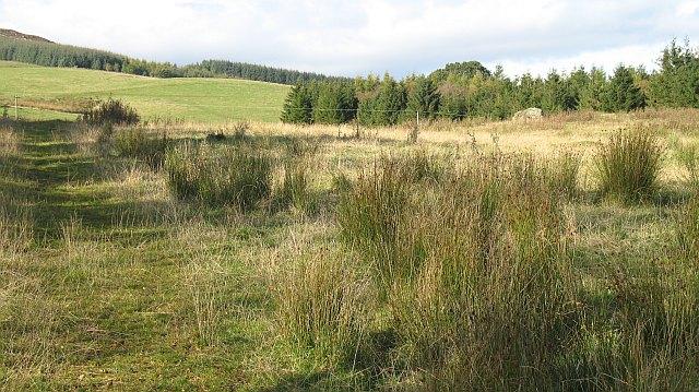 A rough field, Tomnagrew