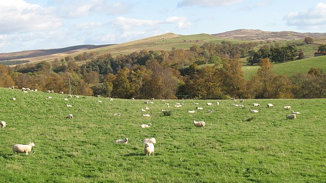 Sheep pasture, Strath Braan