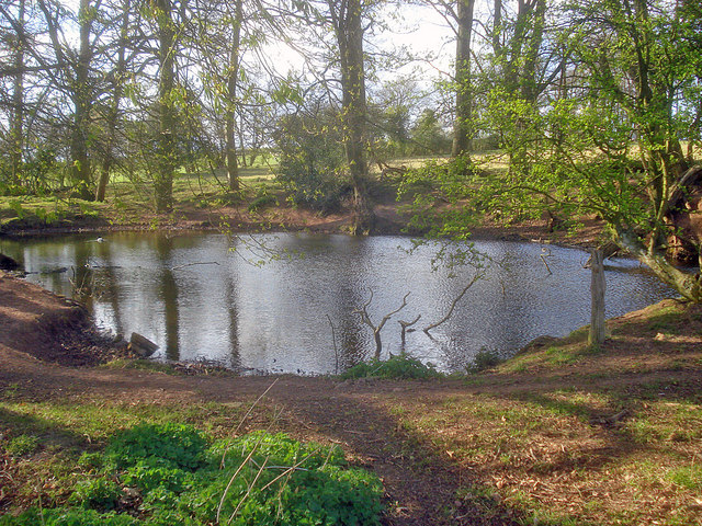 Pond in Docklow Manor Park