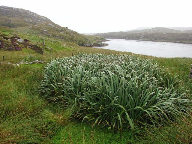 """The """"Narrows"""" on Little Loch Roag"""