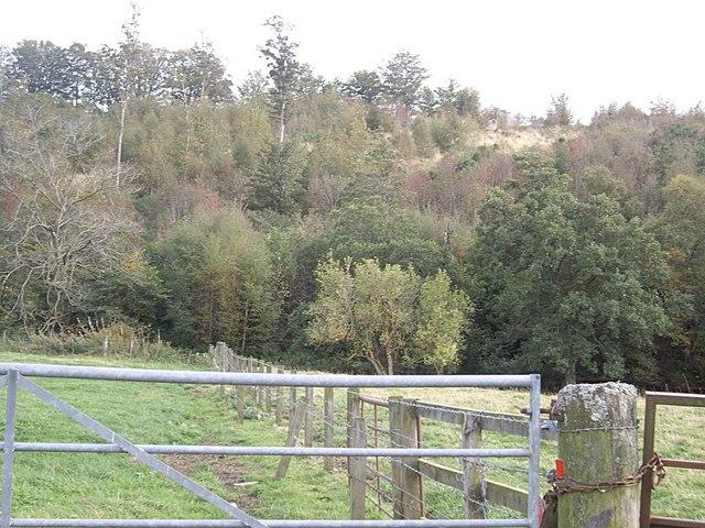 Woodland near Burncruinach