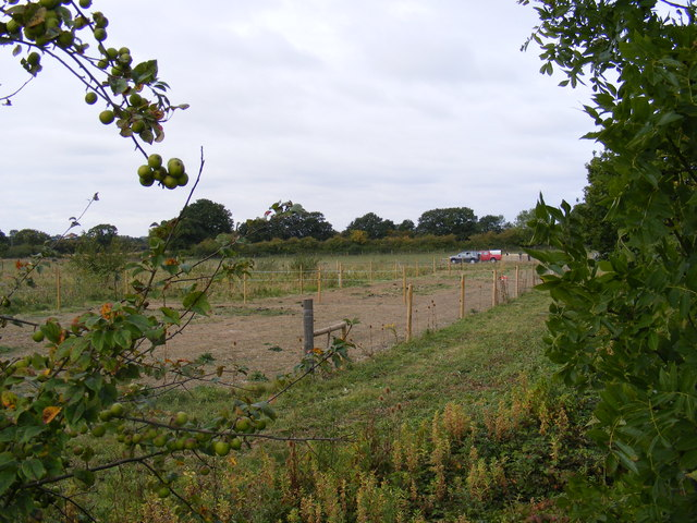 New fencing in a field off Reepham Road