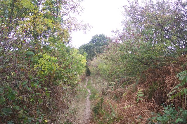 Footpath to Barton Wood