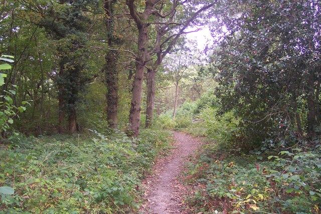 Footpath in Paddock Wood