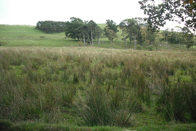 The foot of Wolfelee Hill