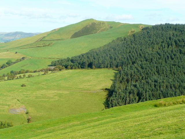 Banc Rhoswydol forest