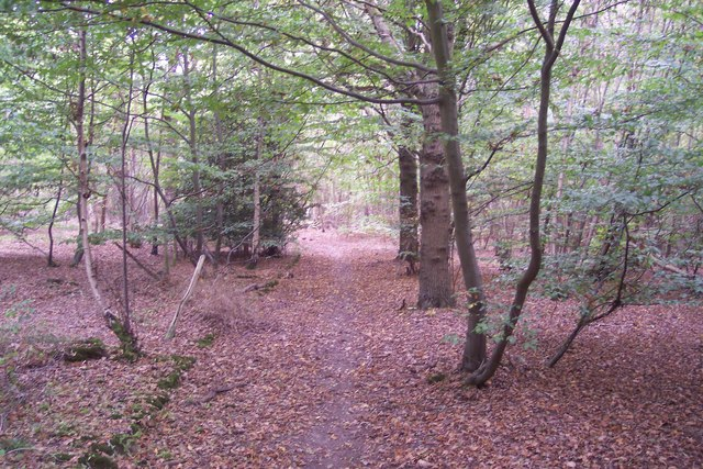 Bridleway in Timber Wood