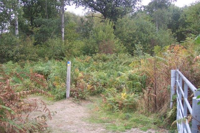 Bridleway junction in Timber Wood