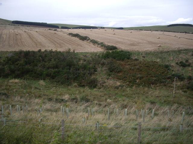 Harvest time near the Shield Burn