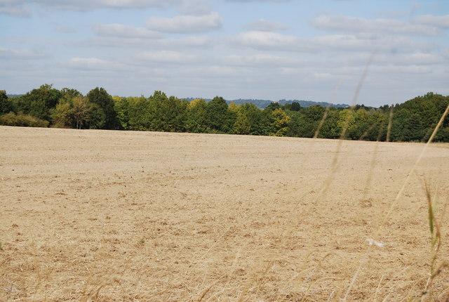 Fallow field by Lower Haysden Lane