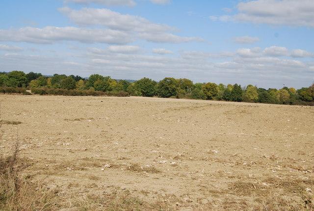 Large field north of Lower Haysden Lane