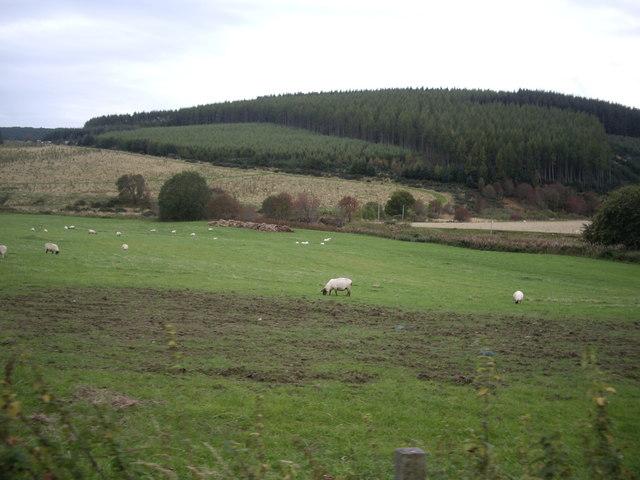 Field by Wester Tillathrowie