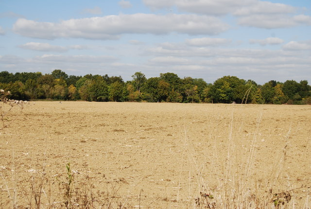 Large field north of Lower Haysden Lane