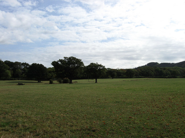 Bushy Field