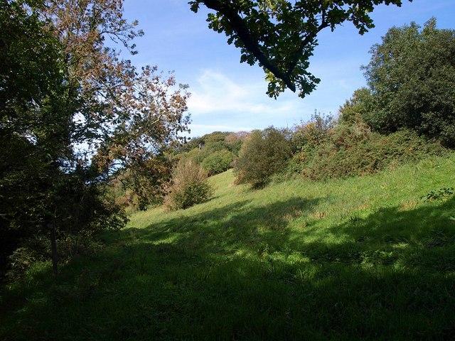 Hillside near Maryknowle Farm