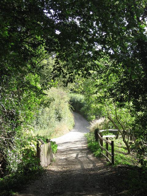 Track to East Chiltington