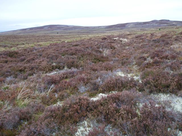 Overgrown track on moorland