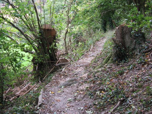 Fallen tree on permissive path near Poynings