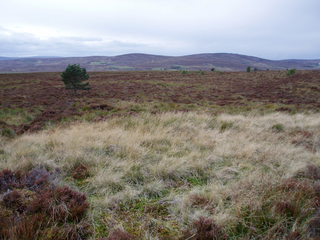 Dava Moor north of Tombain