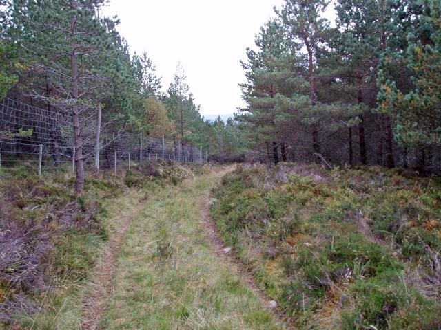 Track through Tombain Plantation