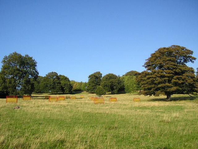 Yorkshire Sculpture Park - 8