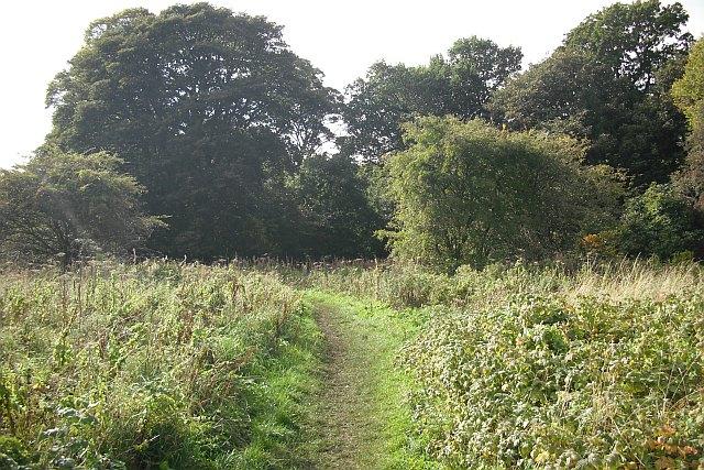 Overgrown garden, Cammo