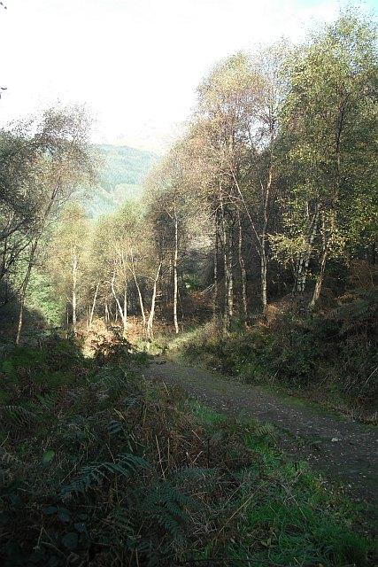 Forest walk, Inverchapel
