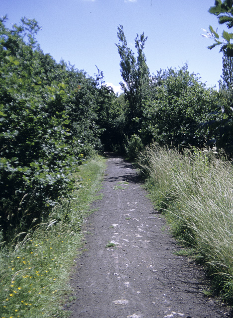 Track in the Dunton Plotlands nature reserve