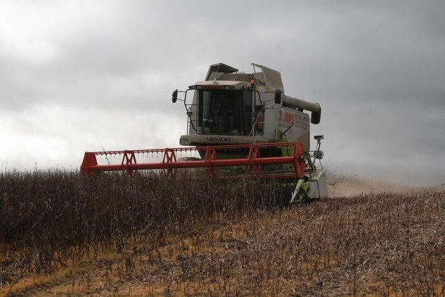 Bean Harvesting