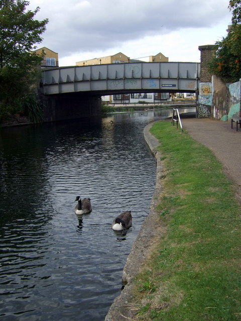 Geese on the Regent's Canal