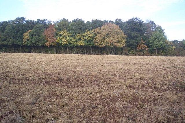 Square copse of wood near Wagstaff Farm