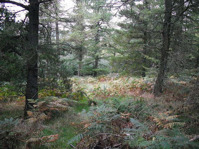Yair Hill Forest