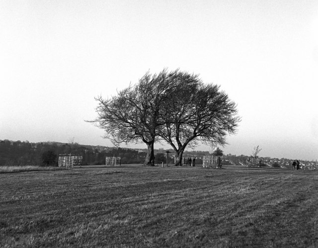 Twin Beeches, Farthing Downs